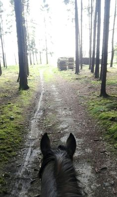 Cold and windy day in April in Austria. As seen through horses ears.