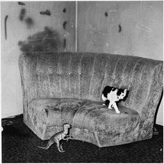 cornered by a dinosaur (photo by Roger Ballen)