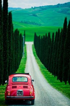 All things Italian - Fiat and cypress-lined street in Tuscany land of dreams