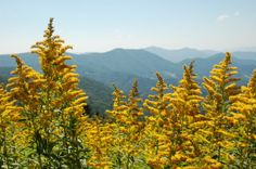 Summer flowers in the mountains...
