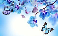 Wallpaper orchid, blue, flowers, beautiful, butterflies, orchids ...