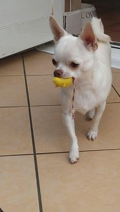 Join jamie on facebook....jamie a little white chihuahua