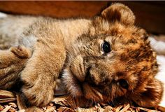 Oh my gosh, if you could have this as a pet I would be all over it! But I wouldn't want it any bigger