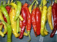 Charleston Hot Pepper Seeds 10 Seed Pack by OrganicSeedSupply