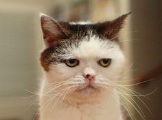 まるで人間の表情のような顔をしているブサカワ猫ちゃん♡ もっと見る