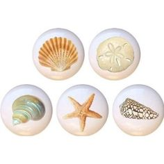 Beautiful Seashells Drawer Pulls Knobs Set of 5