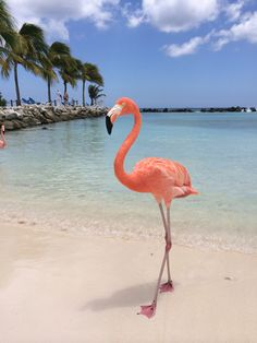 Someday i want to be on a beach with the flamingos. Flamingo Beach, Flamingo Art, Pink Flamingos, Beautiful Birds, Animals Beautiful, Animals And Pets, Baby Animals, Flamingo Pictures, Flamingo Wallpaper