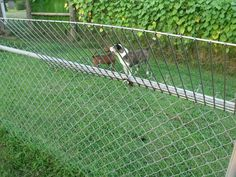 Safe Cheap Way To Keep Cat From Escaping My Back Yard He