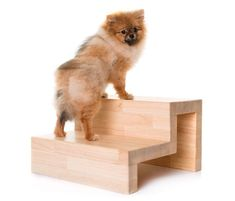 Chihuahua is a very amazing dog. So now that you are interested in adopting or buying Chihuahua, check first the list of Chihuahua colors and markings Fluffy Dog Breeds, Fluffy Dogs, Small Dog Breeds, Small Puppies, Small Dogs, Different Types Of Colours, Dog Stairs, Pomeranian Mix, Popular Colors