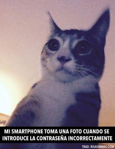 Mi smartphone toma una foto. #humor #risa #graciosas #chistosas #divertidas