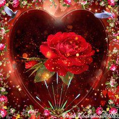 Rose Rose Flower Wallpaper, Flowers Gif, Beautiful Rose Flowers, Heart Wallpaper, Love Flowers, Beautiful Love Pictures, Love You Images, Beautiful Gif, Beautiful Artwork
