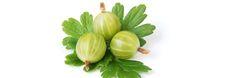 Az egres, mint kitűnő C-vitamin forrás - Természet Patikája Egyesület