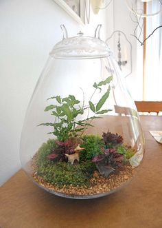 I used to make terrariums all the time when I was little. I miss them.