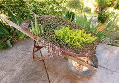 flea markets wheelbarrow garden gate fleas yard ideas dragons blood