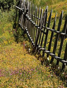 Just Plain COUNTRY CHARM... Picket fence.