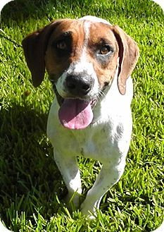 Pin By Jo Wiest On Rescue Dogs Pinterest Tampa Florida Beagle