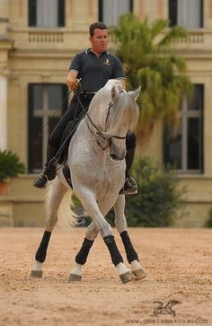 The Royal Andalusian School of Equestrian Art  Photo by Gosia Makosa