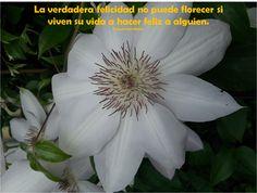 La verdadera felicidad no puede florecer si viven su vida a hacer feliz a alguien.  FVW