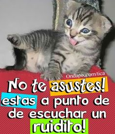 Vas a escuchar un ruidito #animales #gatos #pedo
