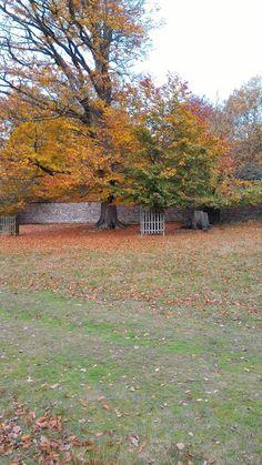 delivering grace: Medieval Deer Park Deer Park, Medieval, Hands, History, Mid Century, Historia, History Activities