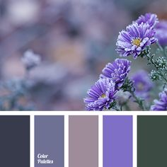Color Palette #3202