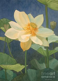 Flowers Painting - Majestic Lotus by Jan Lawnikanis Watercolor Lotus, Lotus Painting, Watercolor Flowers, Painting & Drawing, Watercolor Paintings, Original Paintings, Buddha Painting, Watercolours, Oil Paintings