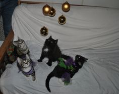 ~Tails from the Foster Kittens~: The kittens prepare for the #GoldenGlobes