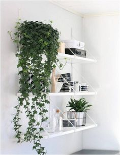 11 Best Indoor Vines And Climbers You Can Grow Easily In Your Home - House Plants - ideas of House Plants - Love growing plants indoors? Some of the best indoor vines and climbers that are easy to grow listed here. Must check out! Minimalism Living, Plantas Indoor, Growing Plants Indoors, Artificial Plants, Inspired Homes, Houseplants, Sweet Home, Interior Design, Design Interiors