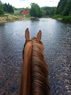 Awesome view from the back of a horse right in the middle of the river.