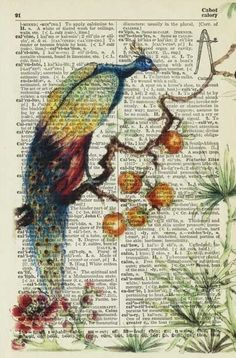 Prints & drawings on book pages