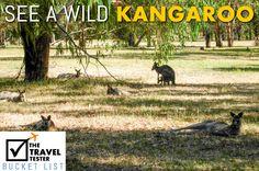 Travel Bucket List - See a wild kangaroo >> http://www.thetraveltester.com/travel-bucket-list
