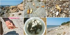 Collecting crabs in Alexandroupolis, Evros Crabs, Alcoholic Drinks, Wordpress, Wine, Collection, Liquor Drinks, Alcoholic Beverages, Liquor