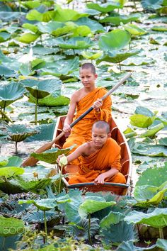 Monks of the Lotus path - Thailand