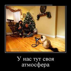 ПОДБОРКА ПРИКОЛЬНЫХ ДЕМОТИВАТОРОВ за 12.01.15