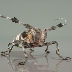 Photorealistic 3D Scanned insect: Boktor, from Thailand