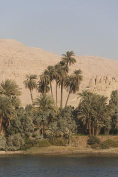 ✮ Palm trees line the banks of the Nile River