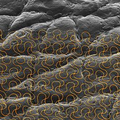 Wearable Electronic Sensors Can Now Be Printed Directly on the Skin | MIT Technology Review