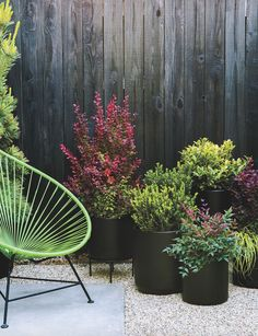Bright grasses and colorful leaves bring seasonal splash to your porch or patio