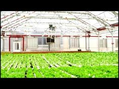The Local, Fresh Farming on New York City Roofs #nyc #farmers #bloomberg