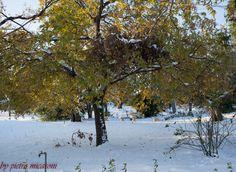 snow and a tree by Pietro Micaroni on 500px