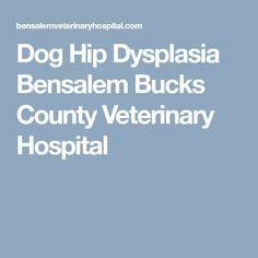 Dog Hip Dysplasia Bensalem Bucks County Veterinary Hospital