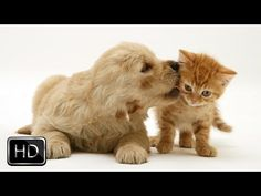 This Kitten Jumps In Bed With A Puppy…The Result Is Just TOO Cute, You'll Have To Watch It Twice!! | The Meow Post