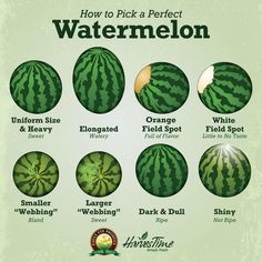 Do you get stressed every time you have to choose a watermelon from the bunch at your grocery store? We get a lot of questions about how to pick a melon that is ripe and sweet. Here are a few tips for how you can pick the perfect watermelon every time! Good Food, Yummy Food, Tasty, Cooking Recipes, Healthy Recipes, Healthy Herbs, Cooking Hacks, Lamb Recipes, Healthy Foods