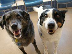 Wisconsin Humane Society Wishlist