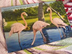 Vintage Florida postcard  pink flamingos at the by 3floridagirls, $12.00
