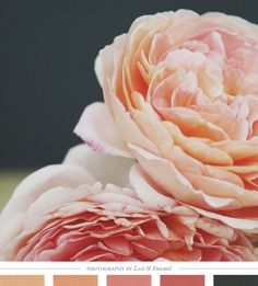 Color Inspiration Daily: 07. 24. 13 - color inspiration and color palette - Summer Roses - beautiful!