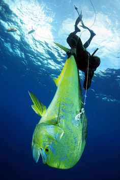 Spearfishing in Punta Mita, Riviera Nayarit is really something special!