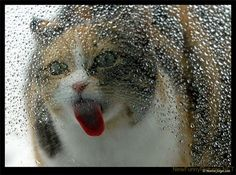 Google Image Result for http://www.newfunnypictures.net/data/media/27/Curious%2520Funny%2520Cats.jpg