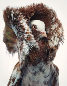 Photographer Tim Flach Highlights Unusual and Endangered Birds in Striking Portraits | Colossal