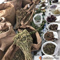 HerbaFarm, Tıbbi Bitki Yetiştiriciliği Eğitimi'nde. Burhaniye Tıbbi Bitkiler Bahçesi, kurutulmuş ve taze bitkiler.pic.twitter.com/iYJDCTCdBj